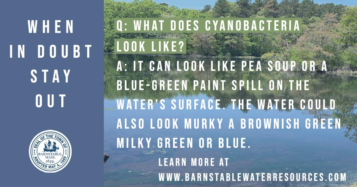 blue-green-algae-near-shore